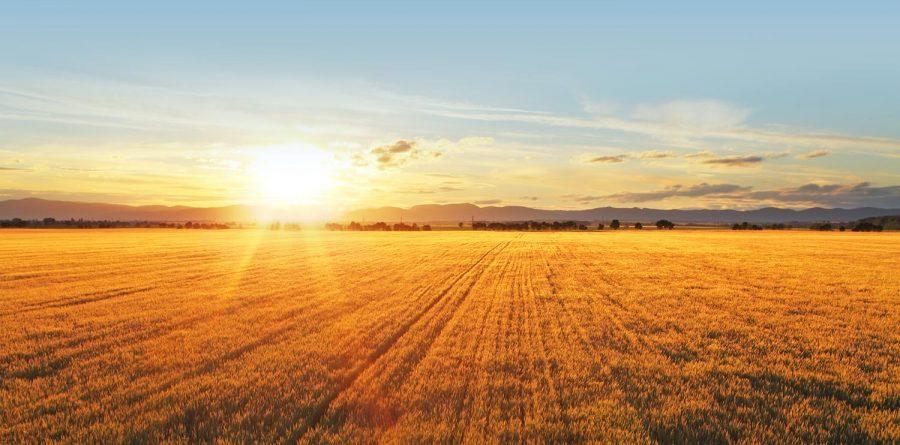 sunset in field